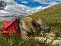 mongolia_tavanbogd_trekking_diuna